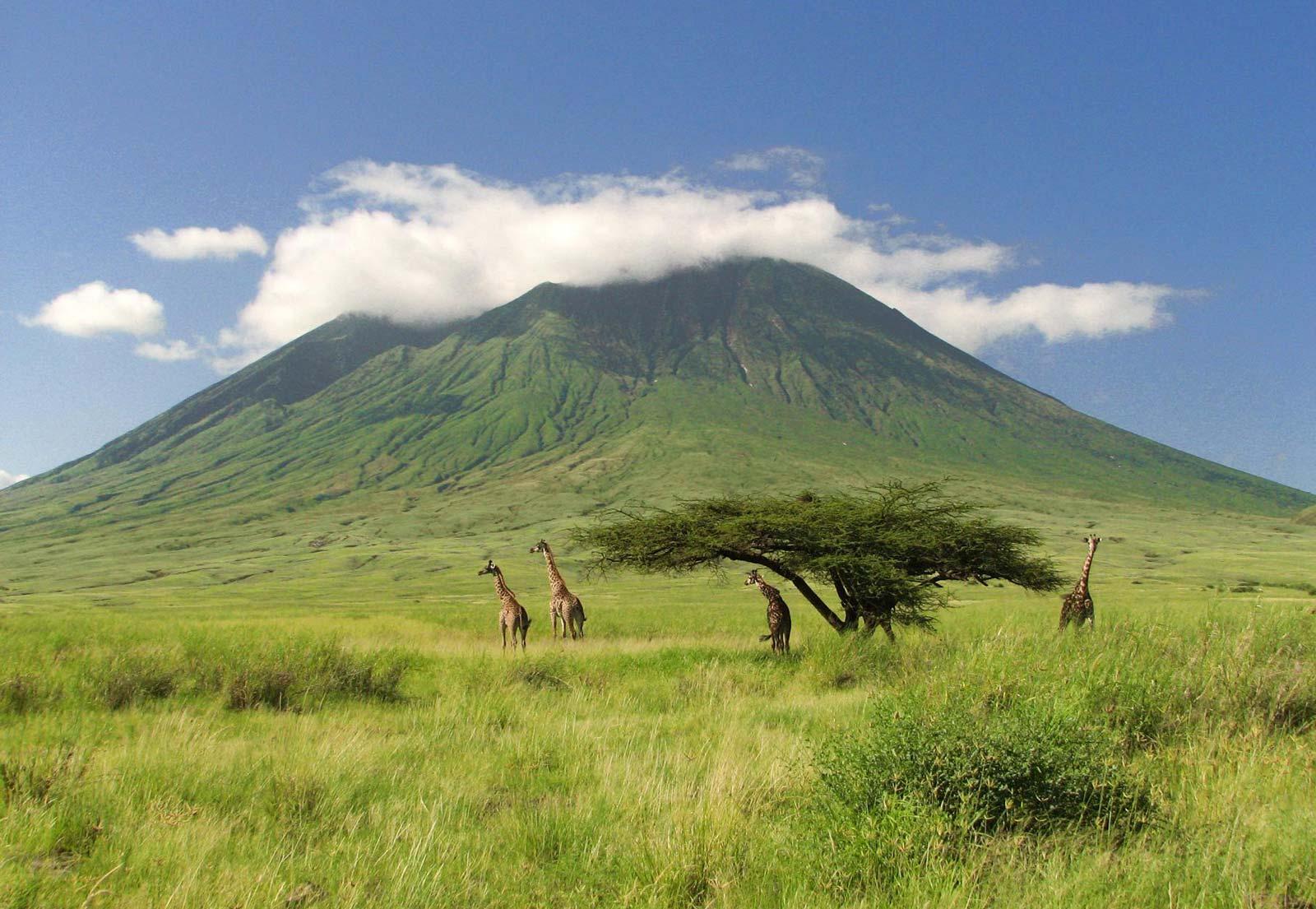 килиманджаро фото горы