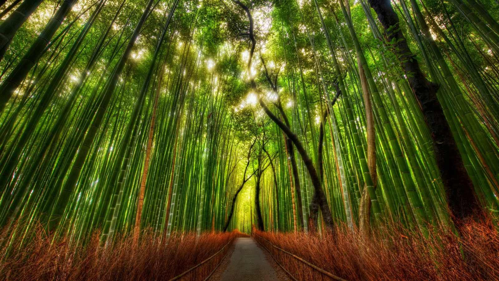 of earth ro bamboo