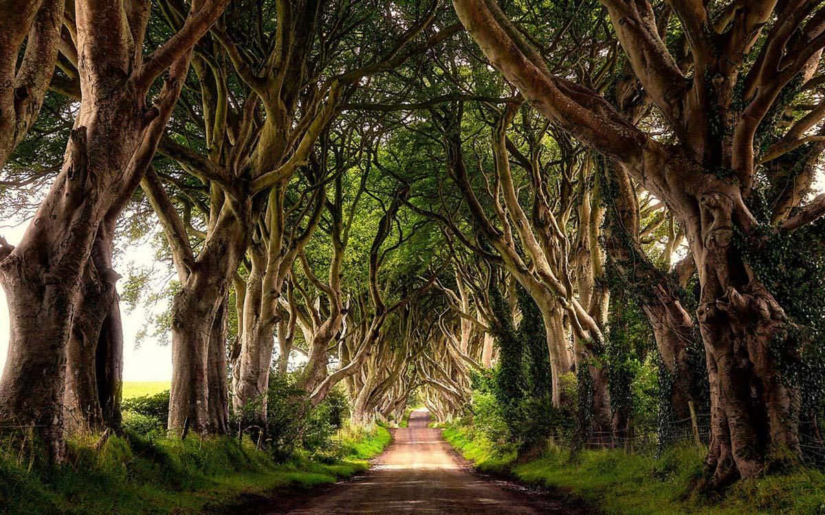 Фото таинственный лес северная ирландия